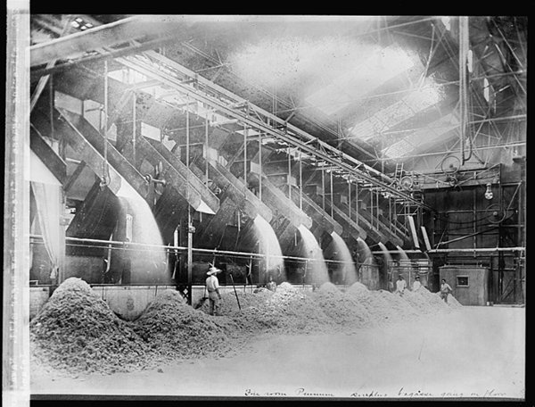 Black and white photo of Delivering Bagasse to fire-room. Raw sugar mill. Photo courtesy of Library of Congress